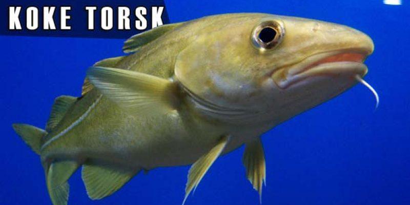 koke torsk
